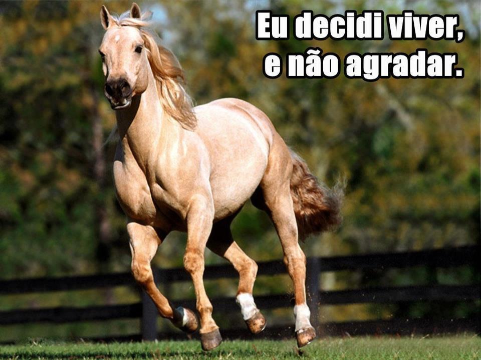Tag Frases Para Foto Com Cavalo Tumblr
