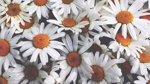 ผลการค้นหารูปภาพสำหรับ flower tumblr