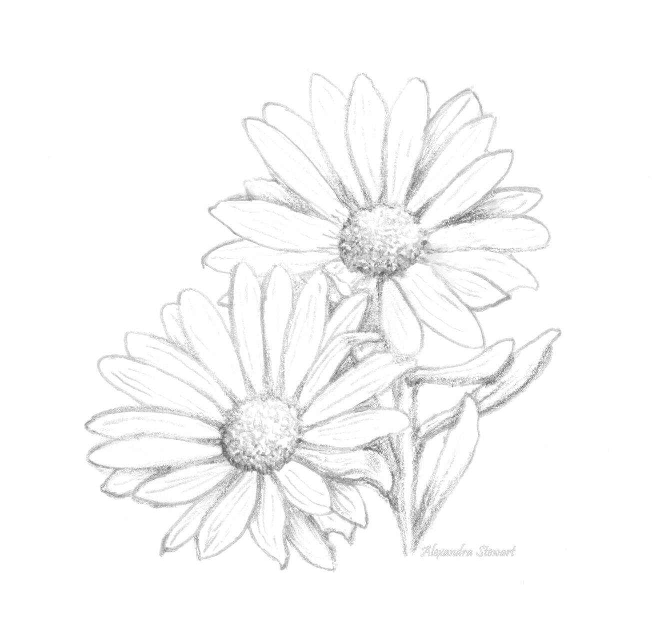 eletragesi: Daisy Tumblr Drawing Images