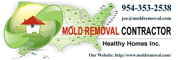 Black Mold Removal Cost