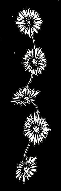 black and white tumblr transparent flowers black and white tumblr    Transparent Black And White Flowers Tumblr