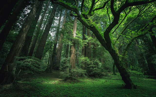 Forbidden Forest Tumblr_static_filename_640_v2
