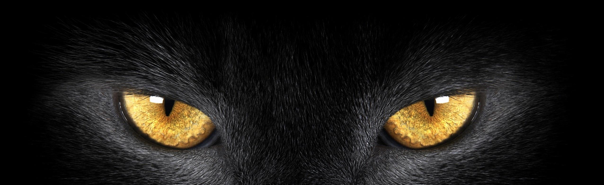 Black Cat Green Eyes Tumblr