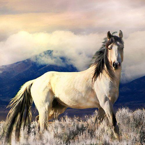 Western Riding Blog