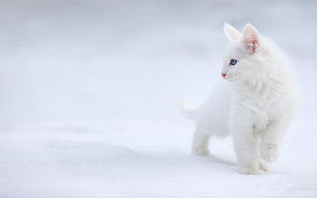 white cat in the snow tumblr