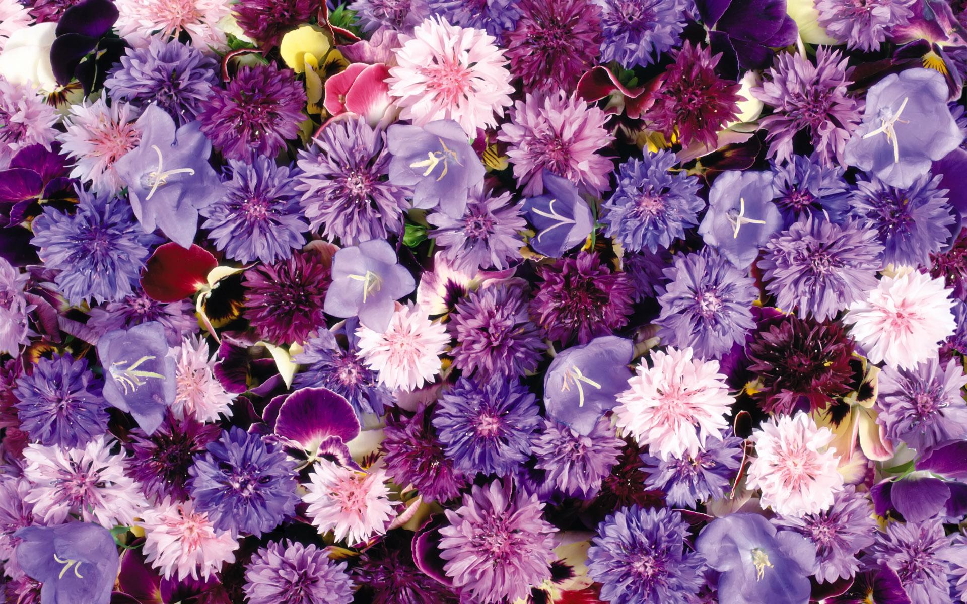 Flower on door tumblr flower door mightylinksfo