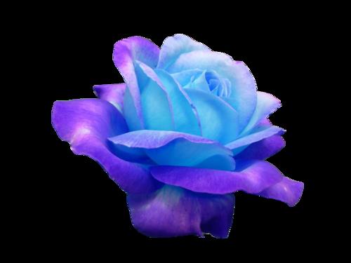 Blue Flowers Transparent Blue flower transparent blueTransparent Flowers Tumblr Blue