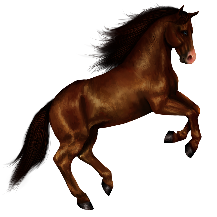 Amazing Wallpaper Horse Dark Brown - tumblr_static_2l6qdj03u2gwkggsscwso40k8  Pictures_429177.png