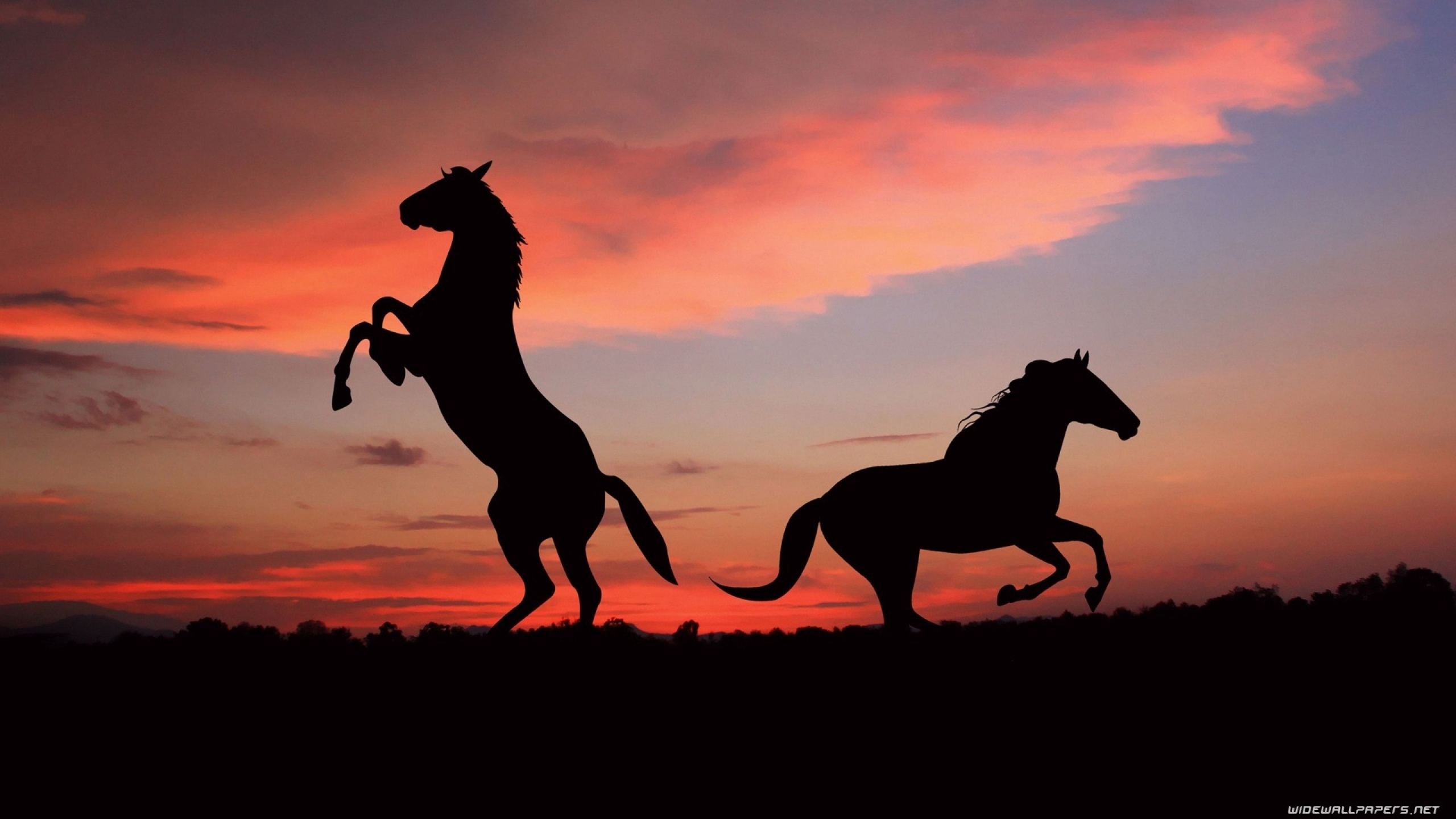 Beautiful Wallpaper Horse Mustang - tumblr_static_sunset_clouds_nature_animals_h_2560x1440_wallpaperhi  Collection_851283.jpg