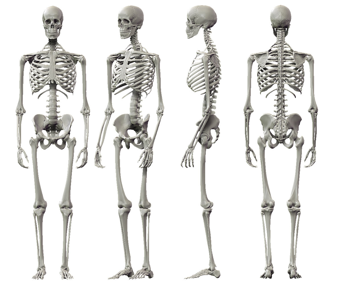 Fine Male Anatomy Tumblr Photo - Anatomy Ideas - yunoki.info