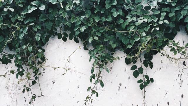 vintage plants tumblr