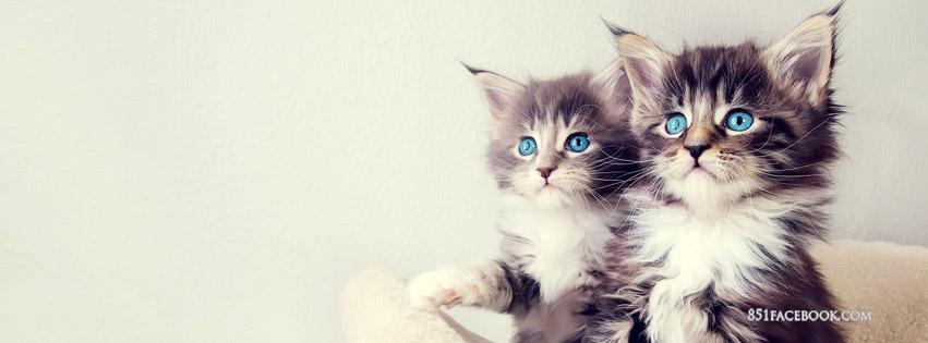 kitty theme