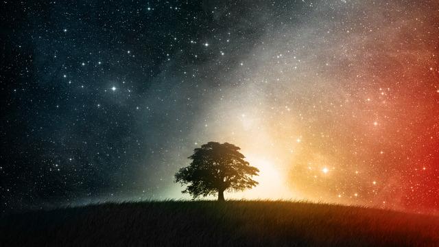 L'arbre aux miracles