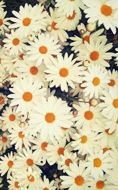 Fondos Tumblr Flores Margaritas Imagui