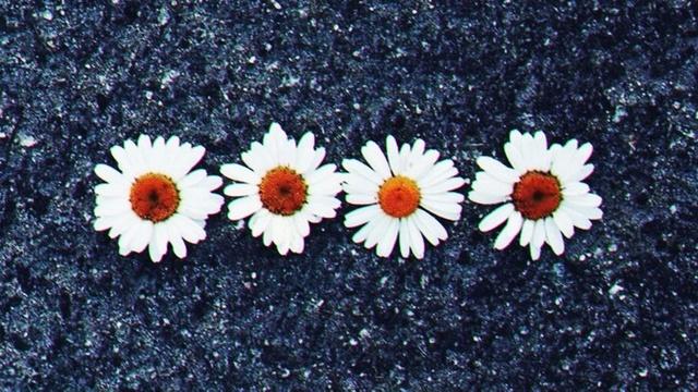 Flores Margaritas Tumblr