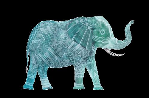 acai elephant
