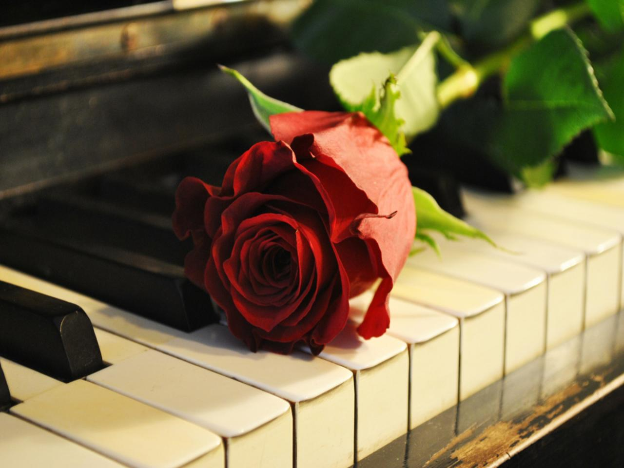 Vintage Rose Tumblr Charle rosePiano With Rose Photography