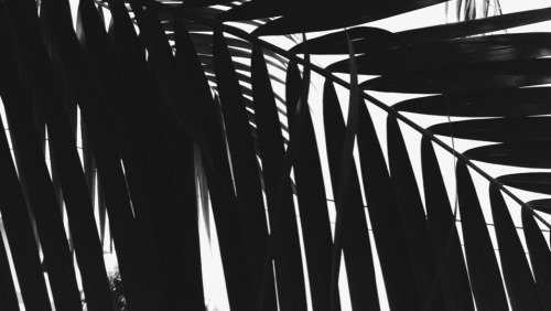 livinu0027 in black sheets