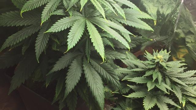 Resultado de imagen para marihuana tumblr