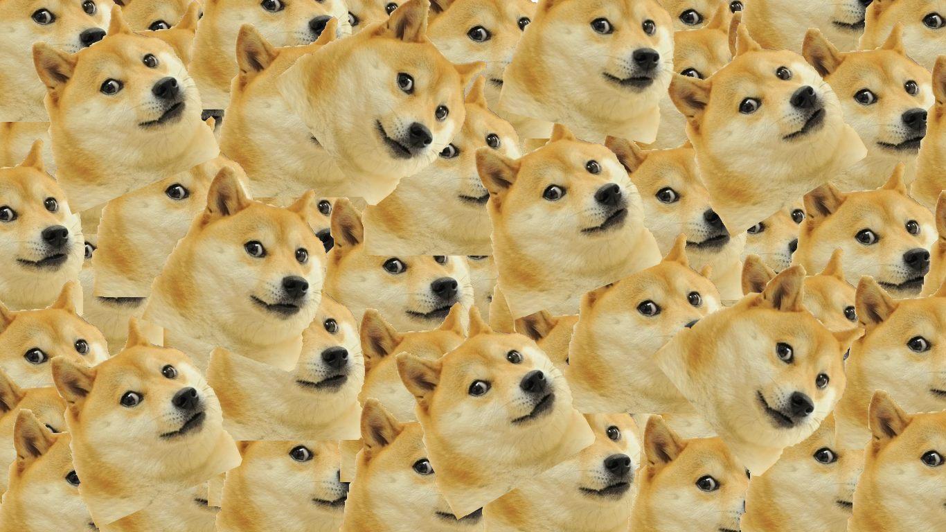 tumblr_static_artworks 000055151158 1j3vmm original doge cat tumblr,Doge Meme Wallpaper