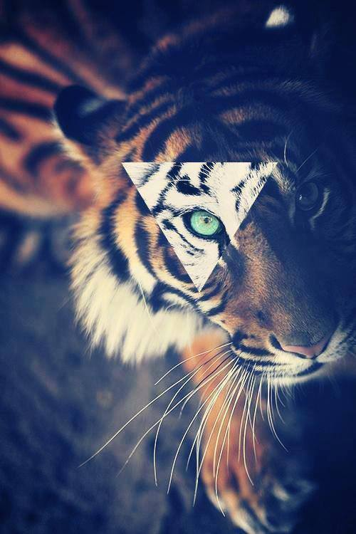 Hipster tiger face - photo#10