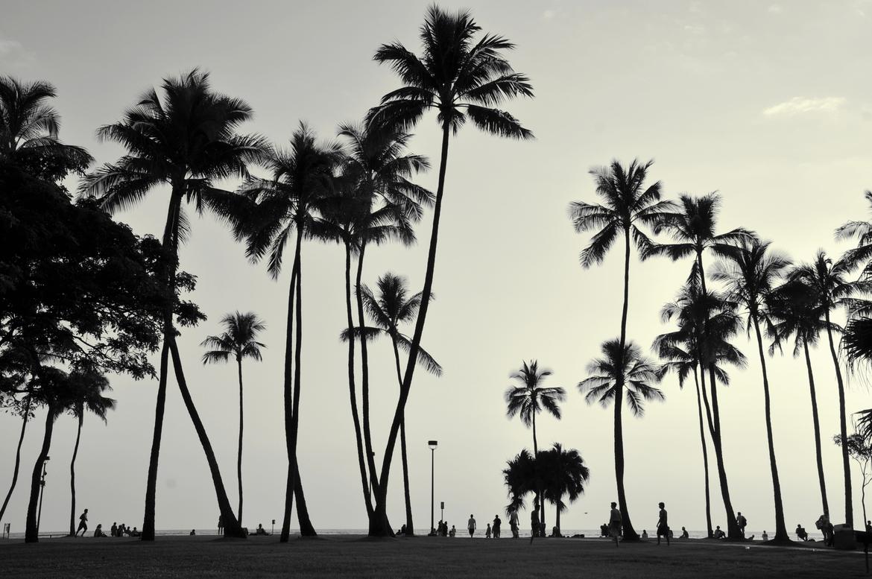 Palm Tree Black And White Tumblr meinafrikanischemangotabletten