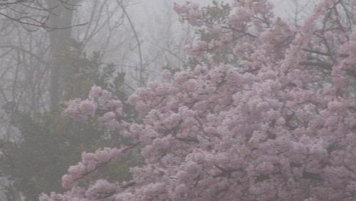 Resultado de imagen para pale pink tumblr