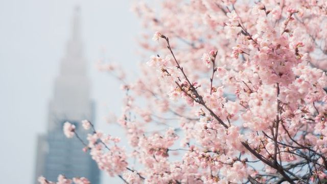 Image result for korea spring tumblr