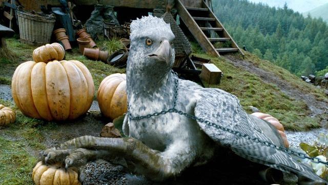 Image result for hippogriff buckbeak