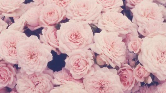 Pretty N Pink