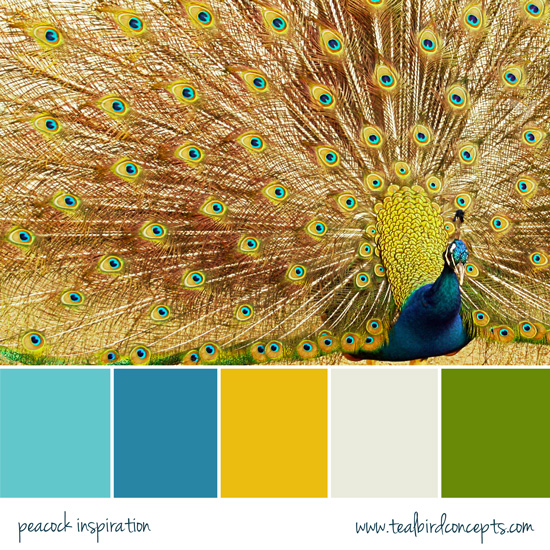 i like these colors peacock themed bedroom pinterest