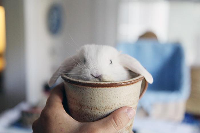 Cute bunnies in cups