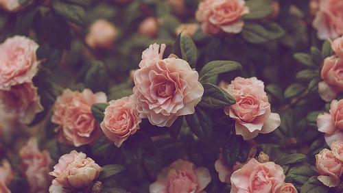 Výsledek obrázku pro tumblr flowers