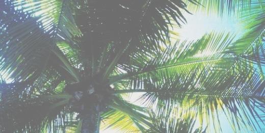 Palm Tree Tumblr Header | www.pixshark.com - Images ...