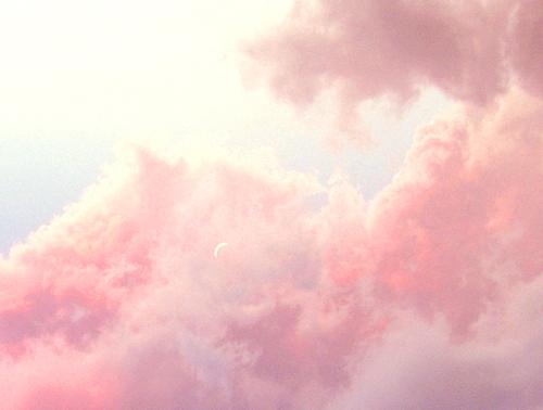 polymorpha tumblr