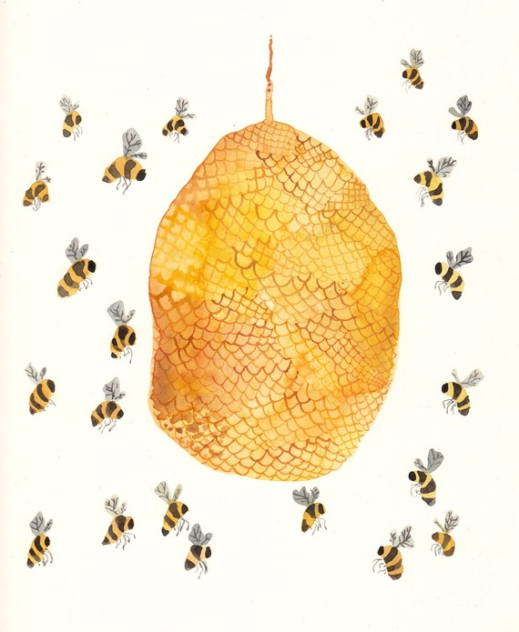 honey bee nest illustration