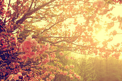 Flowers At Sunsetflowers Sunsettumblr