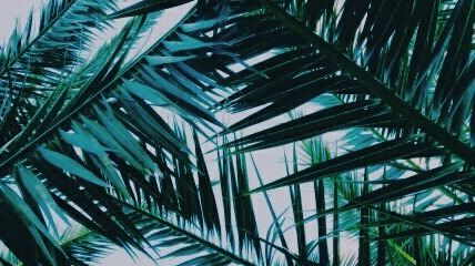 palm fronds tumblr - photo #16