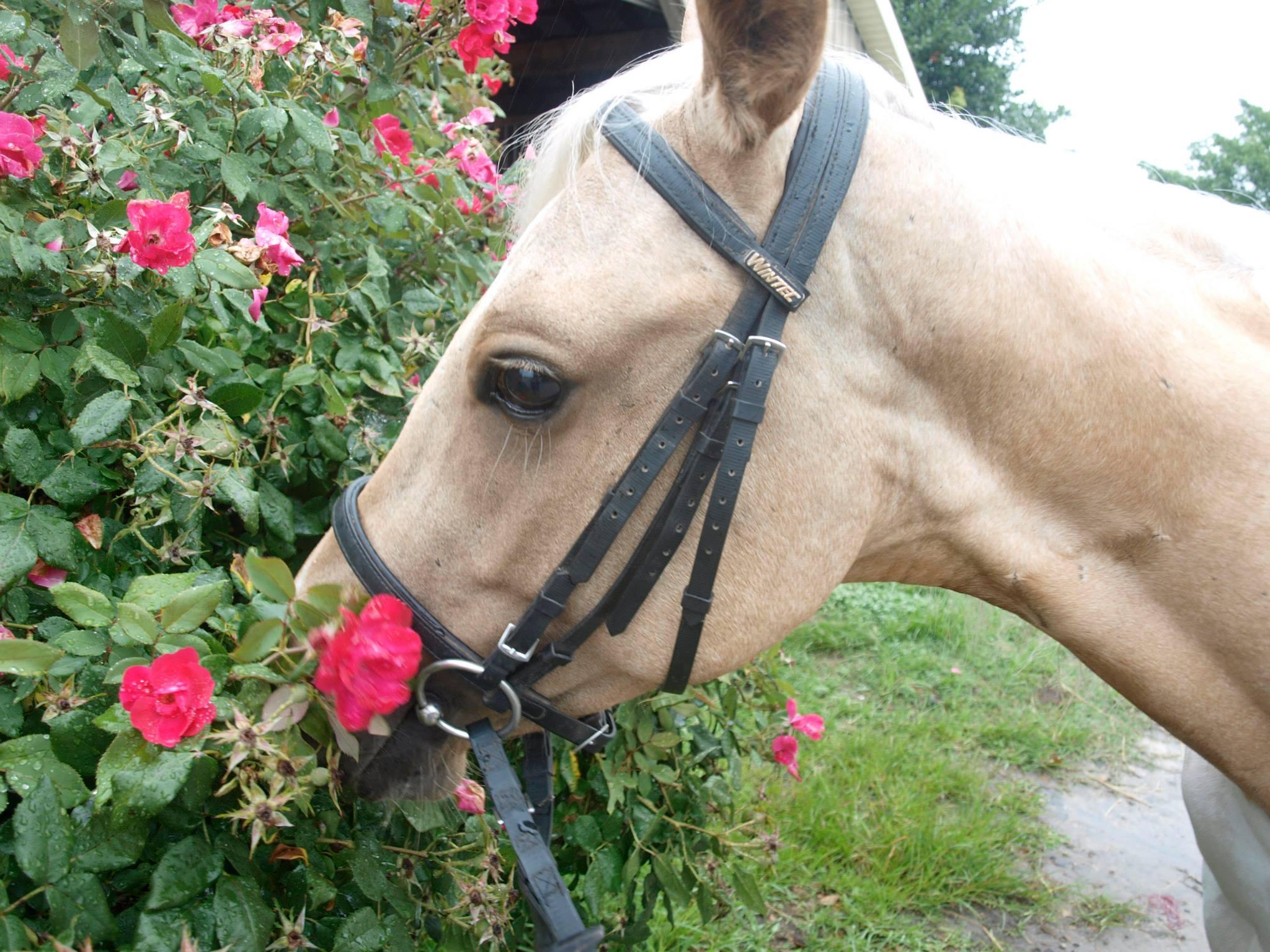 Best Wallpaper Horse Fairy - tumblr_static_53pbkp4i6gsgskk4kgs00ss8s  Picture_671359.jpg