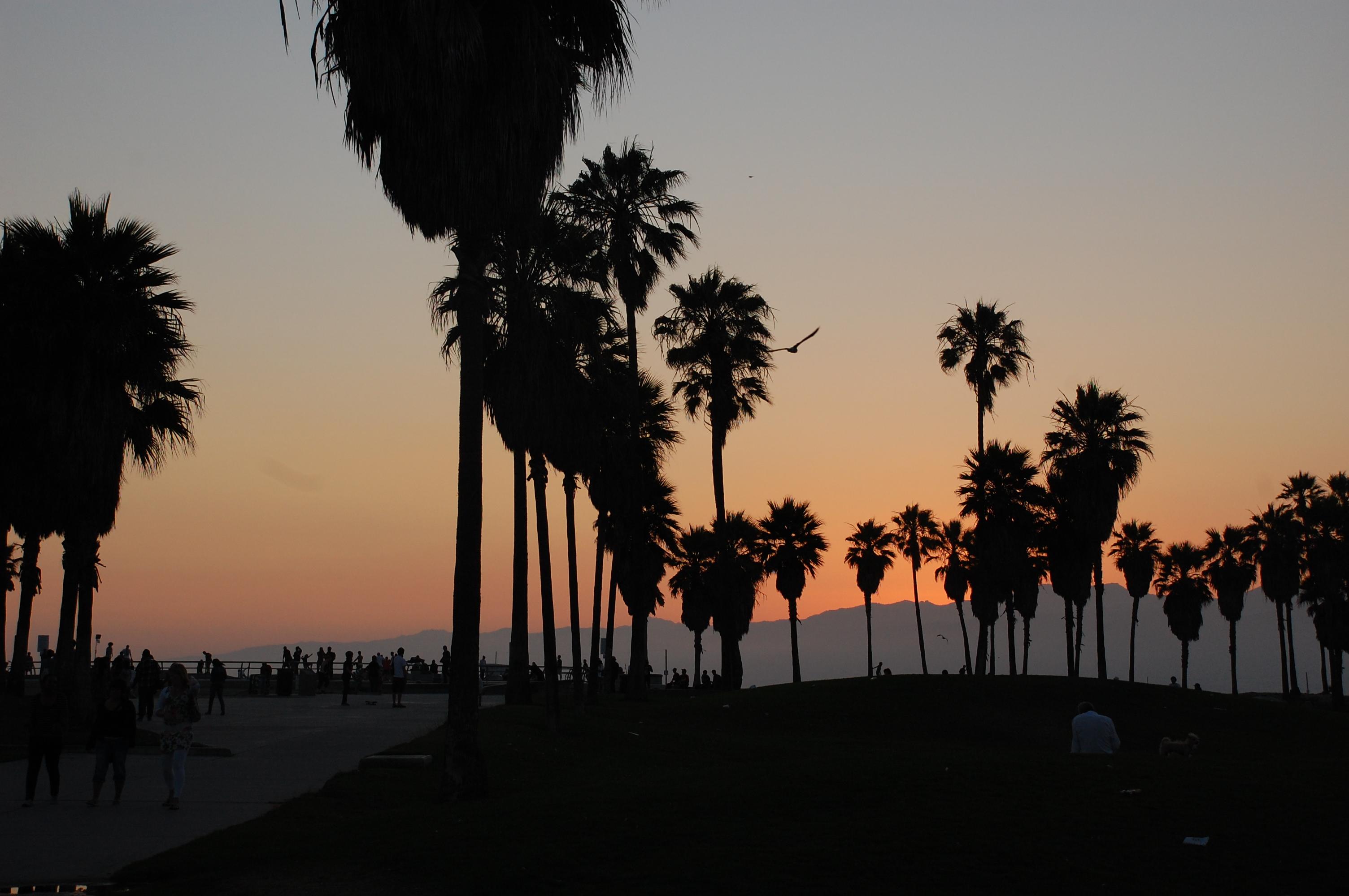 Palm Beach Backgrounds