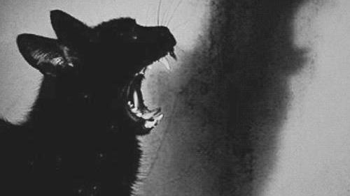 Relativ chat blanc chat noir | Tumblr YQ71