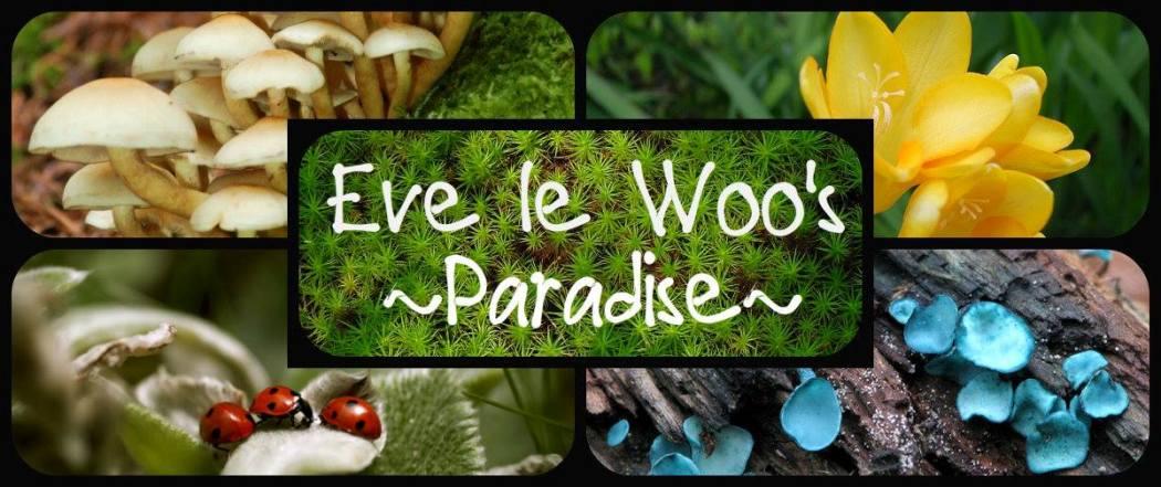 EVE LE WOO'S PARADISE