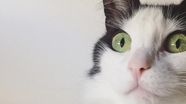 fluffy white cats tumblr