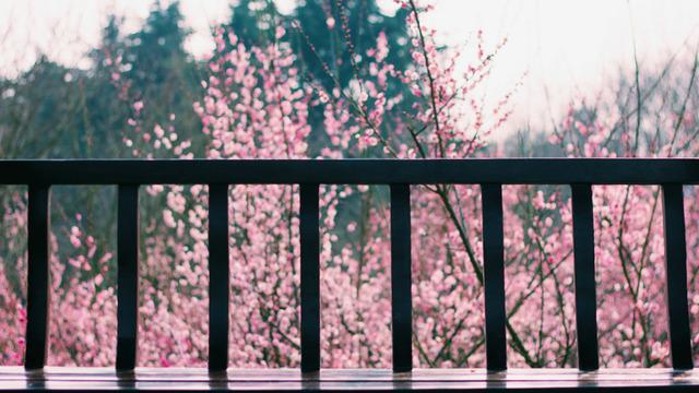 Rosa Fiori Tumblr