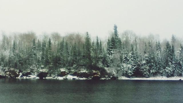 tumblr forest backgrounds wwwpixsharkcom images