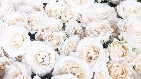 white rose art tumblr