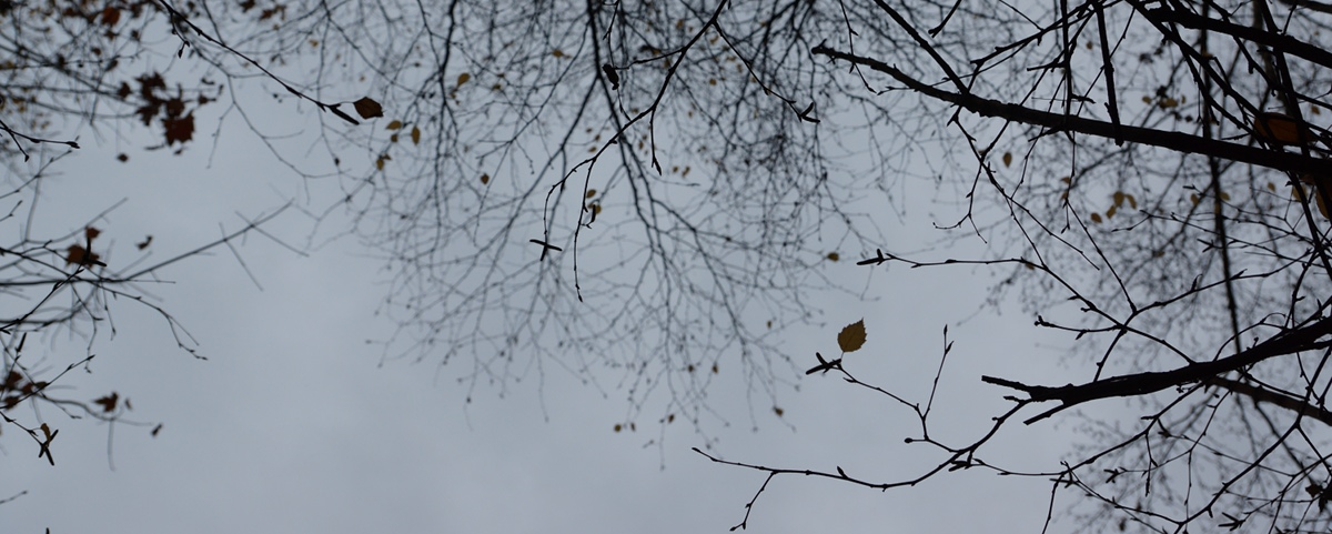 fallen leaf | zen, photography, & life in the city