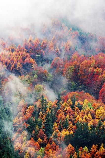 Seasons Blog Directory