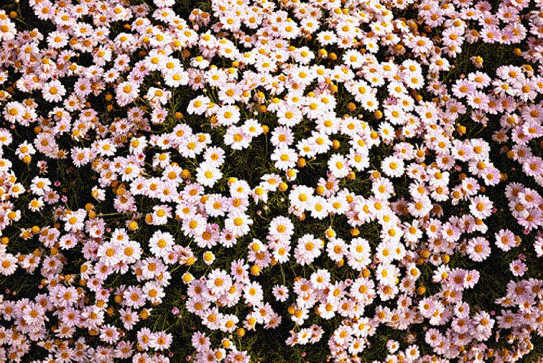 Tumblr background flower
