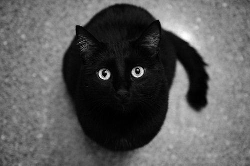 Resultado de imagem para gato preto tumblr